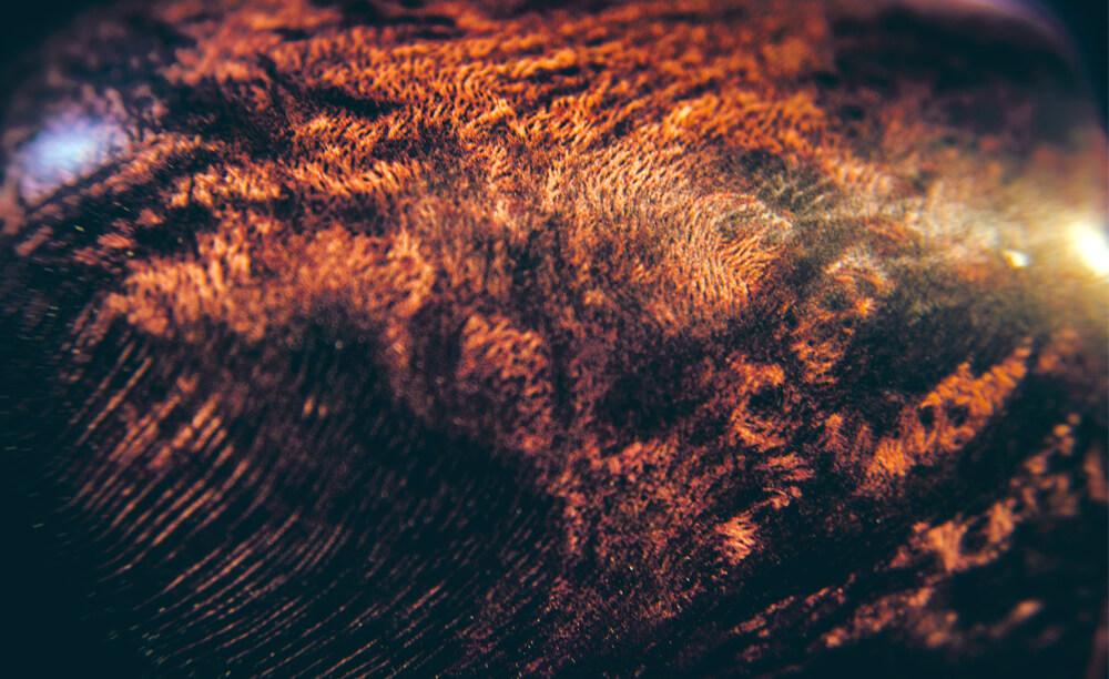 Briar - detailná fotografia